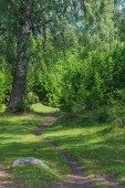 Trail made by cows in a green lush forest