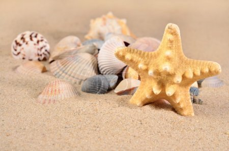 Starfish and seashells close-up in a sand