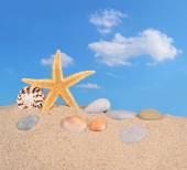 Starfish and seashells on a beach sand