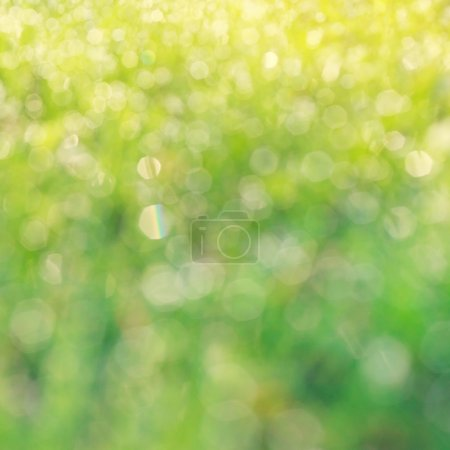 Photo for Drops of dew on a green grass bokeh background - Royalty Free Image