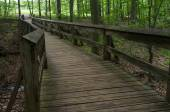 Wooden Bridge Woods