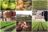 Farm Animal Collage