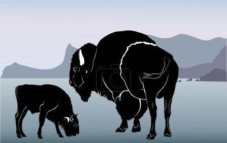 Mature bison and calf