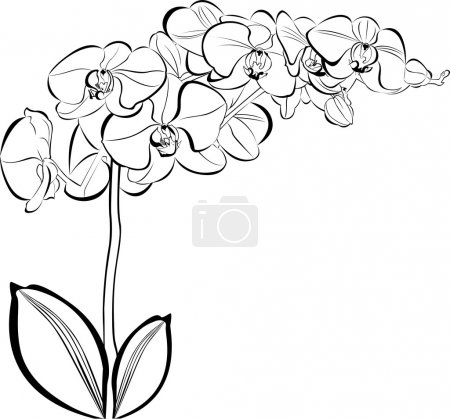 Illustration for Vector silhouette of orchid flowers isolated on white background - Royalty Free Image