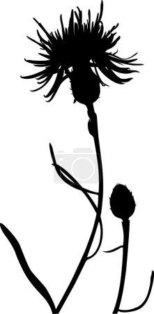 Beautiful Thistle flower