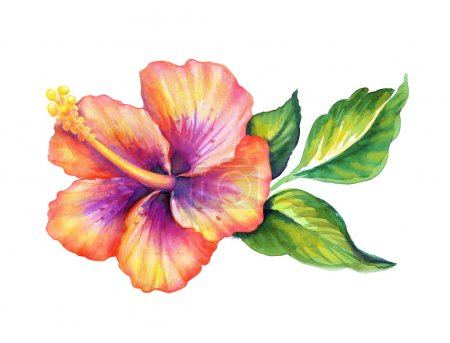 Photo for Exotic hibiscus flower with green leaves, watercolor illustration - Royalty Free Image