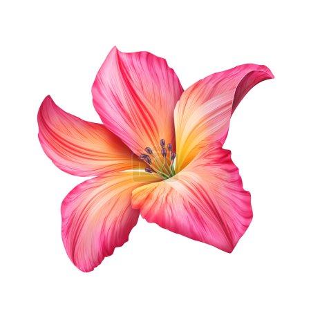 Photo pour Floraison de fleur de jardin isolé sur fond blanc - image libre de droit