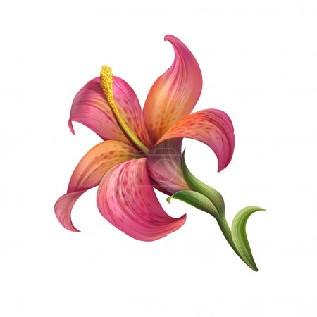 Blooming garden lily flower