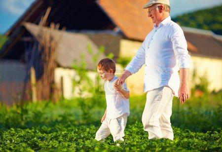 abuelo y nieto juntos en su granja, entre las filas de patatas