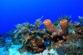 """Постер, картина, фотообои """"тропический коралловый риф"""""""