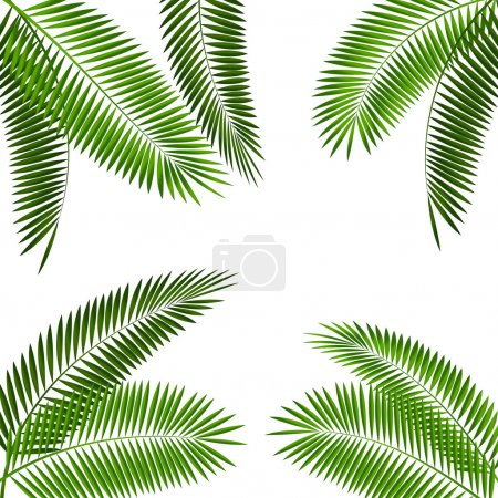 Illustration for Palm Leaf Vector Illustration EPS10 - Royalty Free Image
