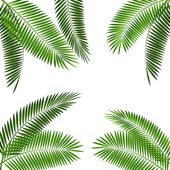 Palm Leaf Vector Illustration EPS10