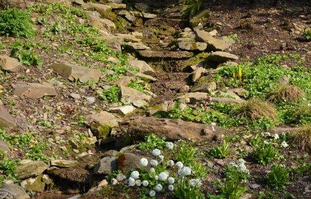 A small rock garden