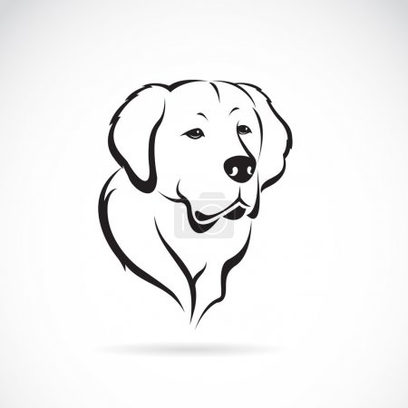Vector image of golden retriever on white background