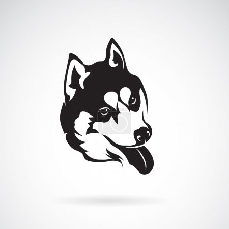 Vector image of a dog siberian husky on white background