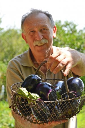 Farmer holding basket of eggplants