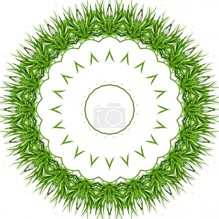 Photo for Circular Frame of green grass Isolated on white background - Royalty Free Image
