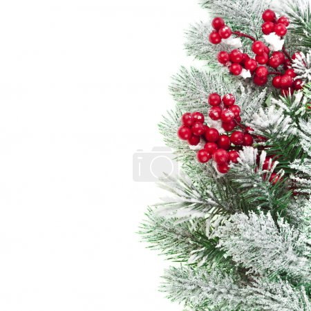Red rowan and fir tree branches