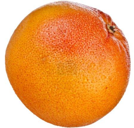 One citrus grapefruit isolated