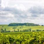 In the vineyards somewhere in rhineland-palatinate...