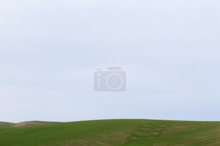 Photo for Green dry farm fields in northern Idaho - Royalty Free Image
