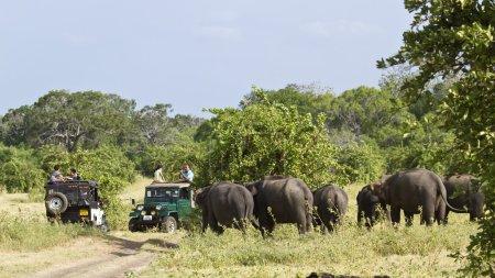 Jeu de voiture dans le parc national de Minneriya, Sri Lanka