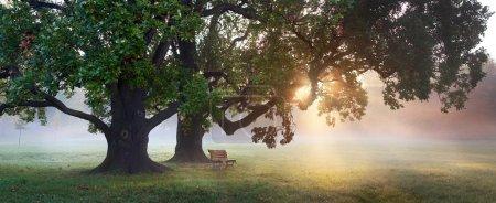 Old oak trees at misty autumn