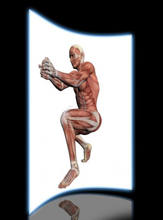 Human Anatomy -Male Muscles