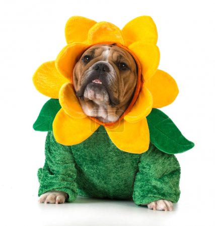 dog dressed like a flower