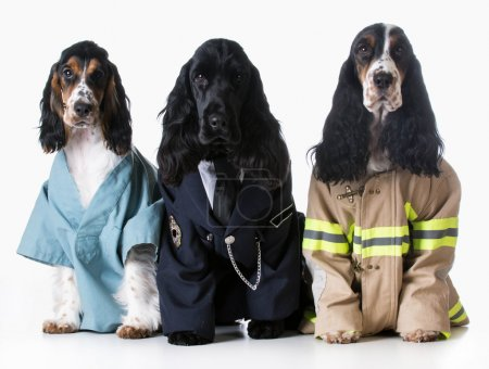 Doctor, policeman, firefighter dogs