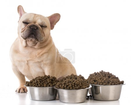 Picky eater - french bulldog refusing to eat on wh...