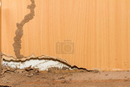 Photo for Termites on old wood background for decorate. - Royalty Free Image