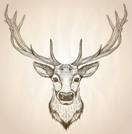 Illustration pour Illustration graphique dessinée à la main d'une tête de cerf avec de gros bois, vue de face, affiche vectorielle animalière . - image libre de droit