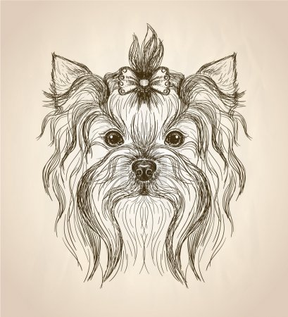 Hand drawn graphic portrait of yorkshire terrier.