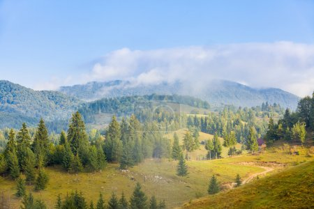 Carpathian mountains and a pine forest