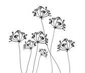 Fennel Flower Vector