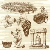 vineyard hand drawn collection