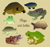Set with frogs and turtless