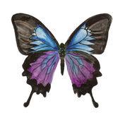 Motýlek. Akvarel na bílém pozadí