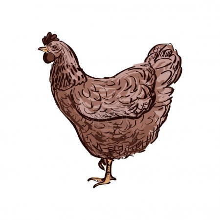 Doodle Hen, sketch illustration. Isolated in white background.