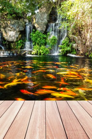 Koi fish in pond at the garden with a waterfall and wood walkway