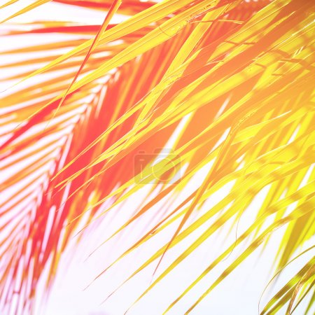 Leaves of Palm Trees in Sun Light. Natural Holiday Background