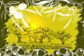 Vector illustration of Olive harvest landscape