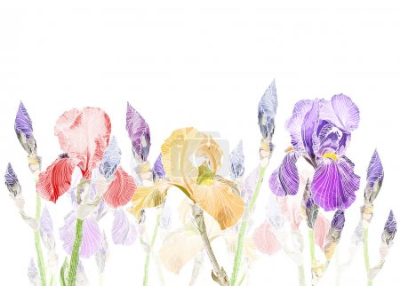 Illustration for Vector Art Pastel background with Beautiful iris flowers - Royalty Free Image