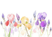 Art Pastel background with Beautiful iris flower