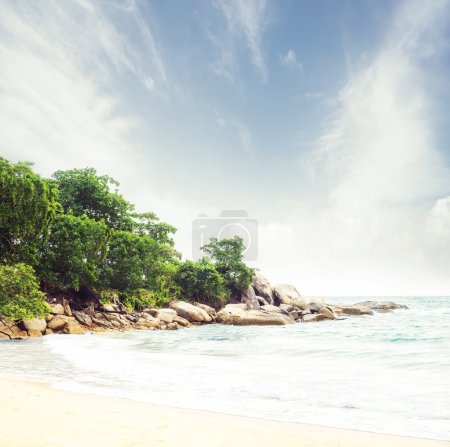 Tropical forest and sea coast