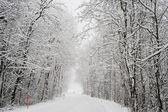 Zasněžená krajina v Engelberg