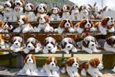 Plush Saint Bernard dogs