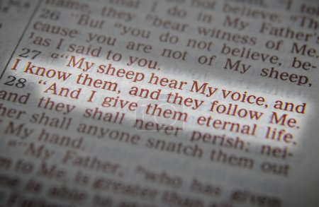 Bible text - I am the good shepherd - John 10:14