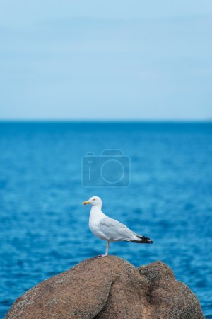 Seagull standing over blue sky and ocean